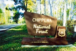Chippewa National Forest